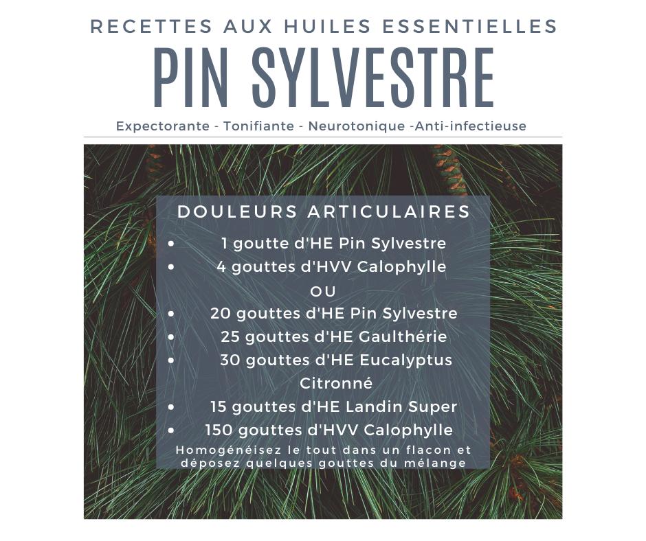 Recette huile essentielle pin Sylvestre contre les douleurs articulaires
